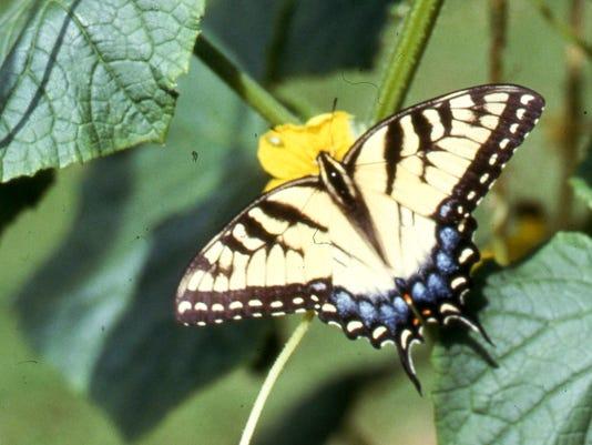 -dhp_Poff_Butterfly_1.jpg_20140912.jpg