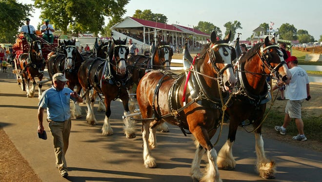 Michael Lehmkuhle, The Advocate Budweiser clydesdales make their way around the fairgrounds Thursday evening at the Hartford Fair.