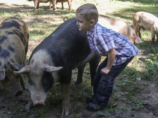 Carter Priess, 5, pets one of his family's pigs at their farm, Reed of Grace Farm. His parents, Ray and Danielle Priess, are the owners of the farm.