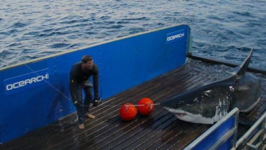 Mary Lee, a shark tagged by OCEARCH in 2012, has returned to the Jersey Shore.