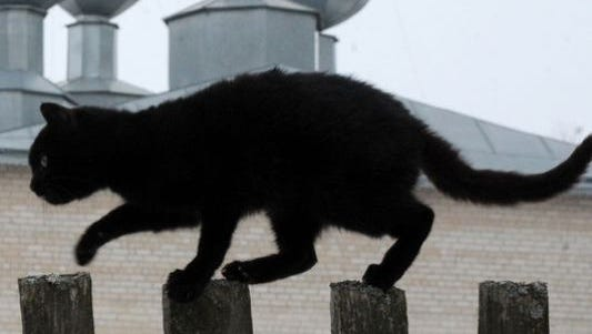 A black cat walks along a fence in front of an orthodox cathedral in the Belarus village of Zapesochie, southwest of Minsk on February 19, 2013.