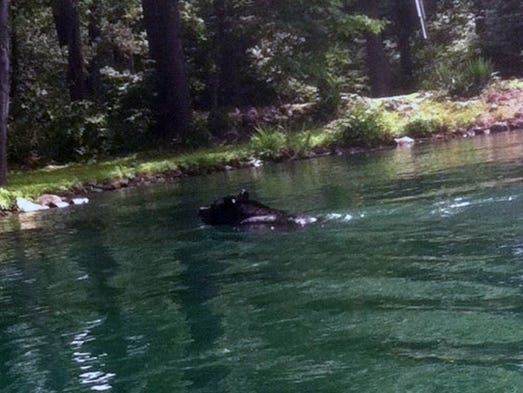 A Parsippany rescue and recovery boat chased a bear swimming across Lake Parsippany on Wednesday afternoon.
