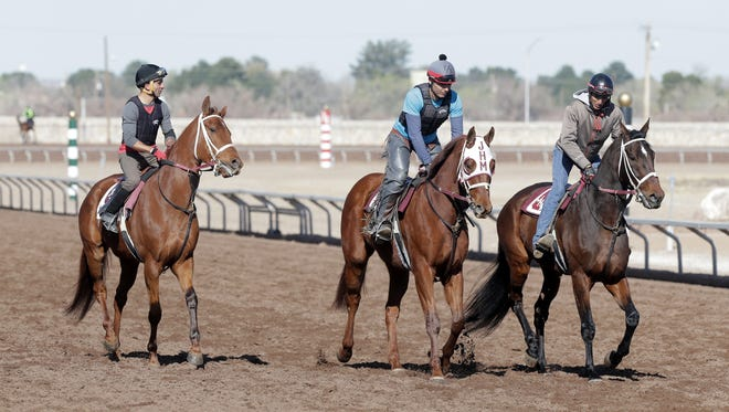 Horses are ridden during a workout at Sunland Park Racetrack in Sunland Park, N.M. Thursday, Feb. 25, 2016. Horses will finally be hitting the track again at Sunland Park, more than a month after an equine herpes outbreak brought racing to halt while track managers and others scrambled to keep the virus from spreading.