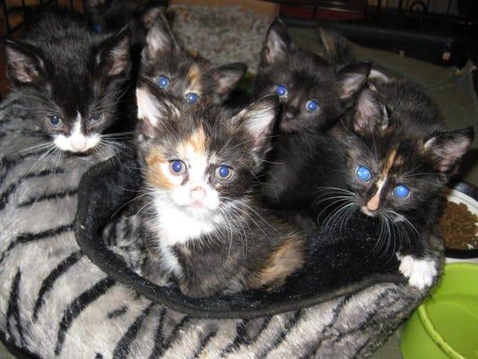 jeri bundle of kittens