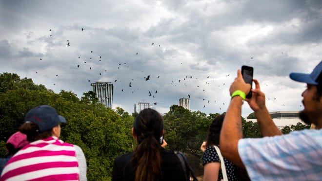 People watch bats fly out from under the South Congress bridge in the rain at the 15th annual Bat Fest on Aug. 24, 2019.
