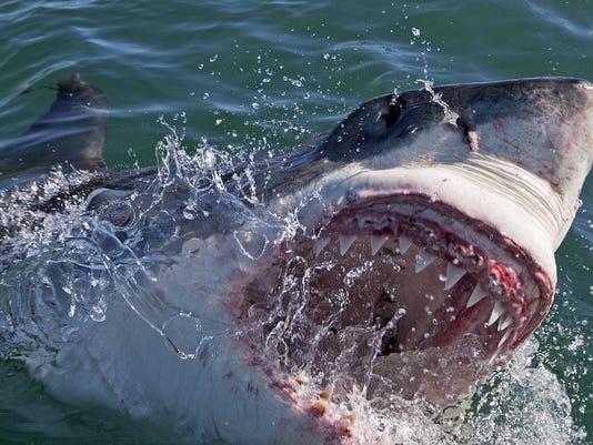 BC-US--Shark Attack-.JPG