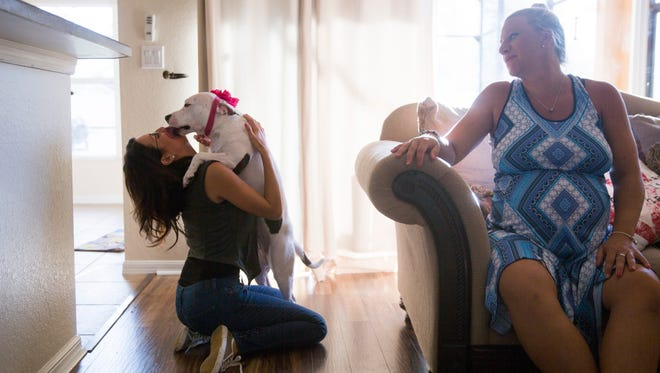 Pit bull rescue Abigail, 1, gives her new owner Megan Contreras kisses at her home as Love is Fur Ever Dog Rescue founder Victoria Frazier, right, looks on Wednesday, July 5, 2017 in Fort Myers. Abigail was found in November of last year as a stray, scarred and bloodied, due to what is believed to be her involvement in a dog-fighting ring in Miami-Dade county. Through rescue group Love is Furever Abigail was able to recover fully and find a new home.