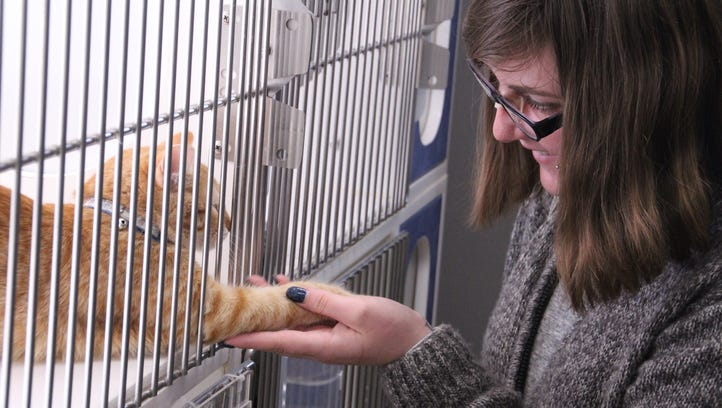 Animal shelter needs cuddlers for critters