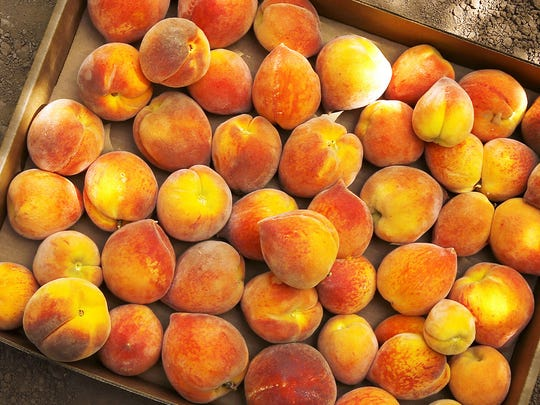 Fresh peaches from the tree during the Peach Festival at Schnepf Farms in Queen Creek.