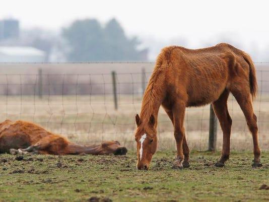 Dead horse on ground 1