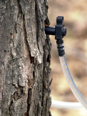 A maple tap.