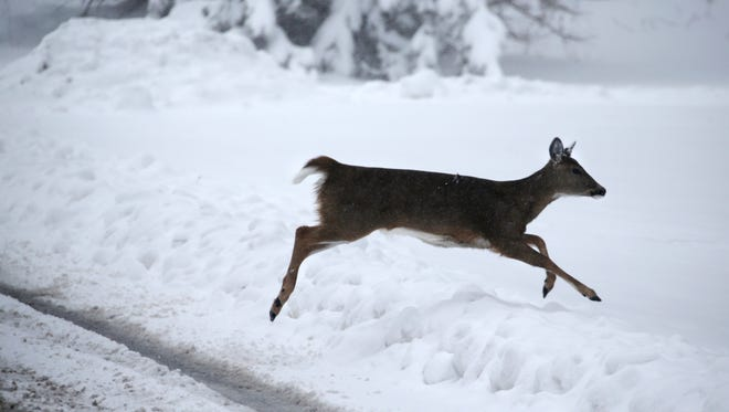A deer jumps a snow bank alongside a road in Fairport during the March snow storm.