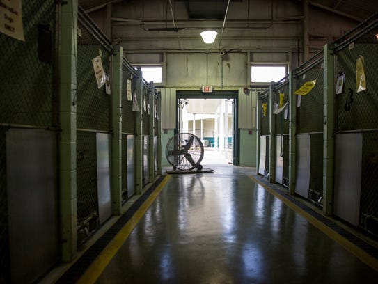 A fan sits in one of the kennels without air conditioning