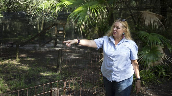 """In this July 20, 2017, file photo, Carole Baskin, founder of Big Cat Rescue, walks the property near Tampa, Fla. The family of Don Lewis, a Florida man who disappeared in 1997 and who appeared on the hit TV series """"Tiger King,†has hired a lawyer and is offering $100,000 in exchange for information to help solve the case. Attorney John Phillips held a news conference Monday, Aug. 10, 2020 and announced the investigation into Don Lewis' disappearance."""