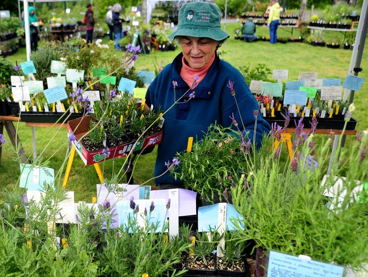 Gretchen Carnaby of the Friends of Bush Gardens browses