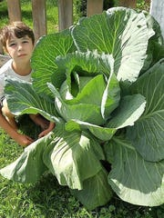Jasper Wood, a third-grader of the Williston Central School, is the Vermont winner of the National Bonnie Plants Cabbage Program for growing this 22-pound cabbage.