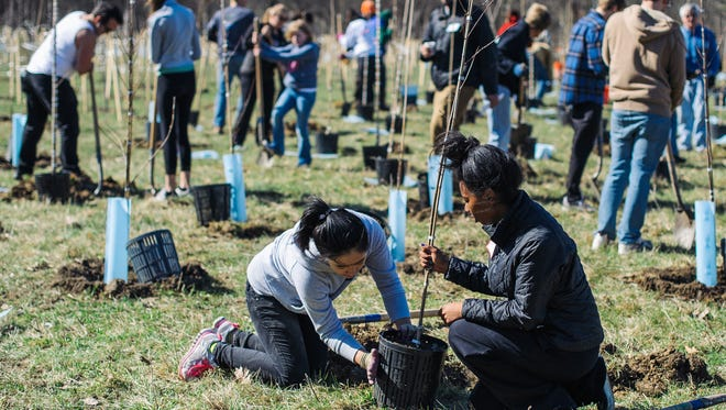 This 2015 photo shows Greening of Detroit crews planting trees in Detroit. In 2016 the non-profit Greening of Detroit plans to team with City of Detroit to plant tens of thousands of trees in two quarter-square-mile districts in what may be the city's most ambitious greening project ever.