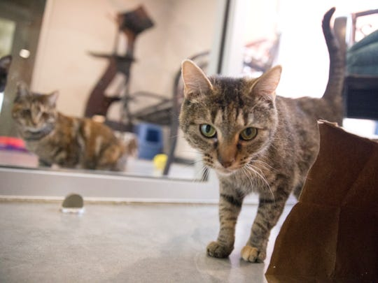 Alexis, left, and Daisy Mae explore the social room on Tuesday at the Farmington Animal Shelter.