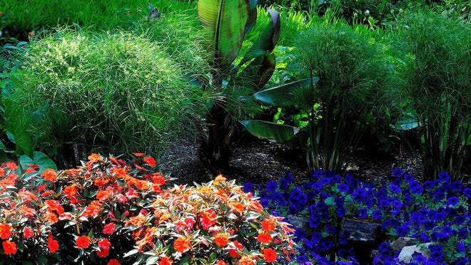 King Tut papyrus, the Red Abyssinian banana and Compact Electric Orange SunPatiens flank a water-like sanctuary of blue petunias.
