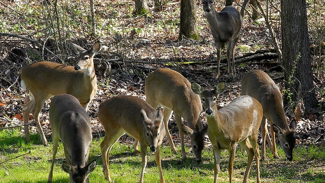 The Commission on Wildlife, Fisheries and Parks voted to allow hunting over feeders.