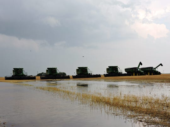 Combines from North Dakota, lined up west of Vernon in Lockett to cut wheat, won't roll into action until fields dry out. Rains fell across much of the area Thursday, delaying the harvest and idling the crews that run the machines and drive grain trucks.