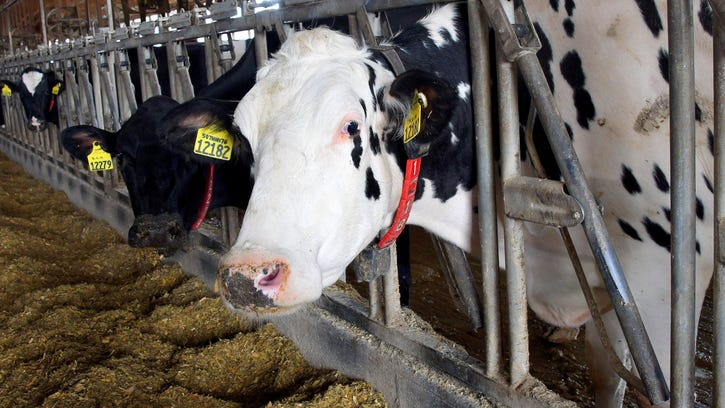 Michigan farms use 'Fitbits' for cows