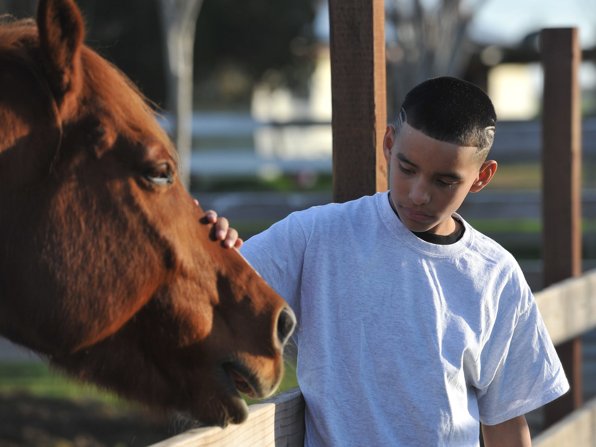 A.L.P.H.A. student Juan Cuevas of El Monte Middle School pats a horse at JM Ranch on Friday, January 15, 2016.
