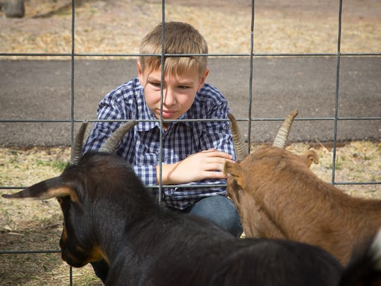 12-year-old Brennon Nirenberg looks at goats during