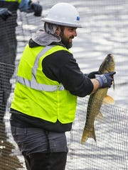 A Salt River Project worker holds a fish taken out
