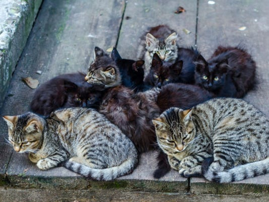 CPO-SUB-110915-STOCKIMAGE-Cats