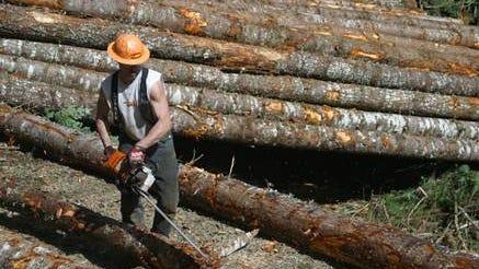 Bureau of Land Management timber