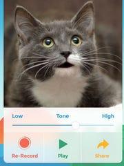 A screenshot of the app My Talking Pet.