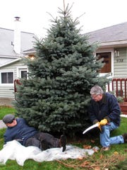 Arctic League board members Tom Bruner, left, and Tom Seem trim branches Wednesday from the bottom of the tree donated for this year's broadcast before cutting it down.