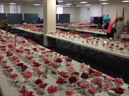 The Tallahassee Camellia Society puts on flower shows