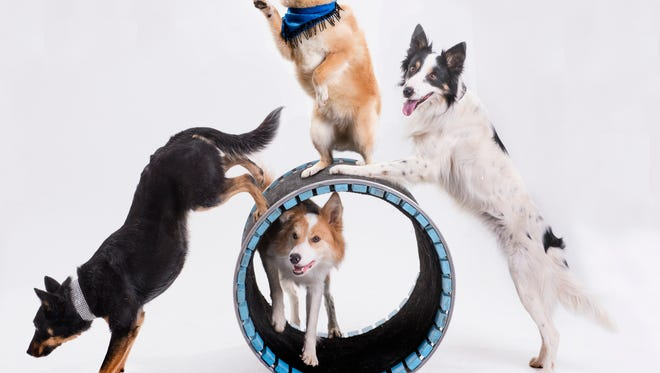 A barrel routine will be part of Satuday's Mutts Gone Nuts show at the Renaissance Theatre.