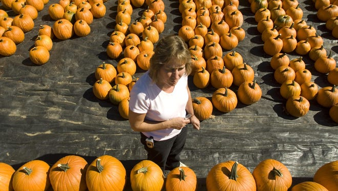 Laurie Mazza-Bombard, one of the owners of the Sam Mazza's produce and farm stand on Lavigne Road off Malletts Bay Avenue in Colchester, shows off the pumpkin inventory several seasons ago. Yankee Magazine recommends Mazza's as a fall pumpkin pick-your-own destination in its fall issue.