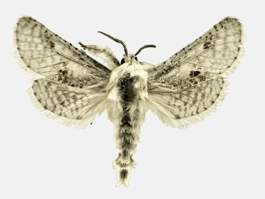 Name a Moth