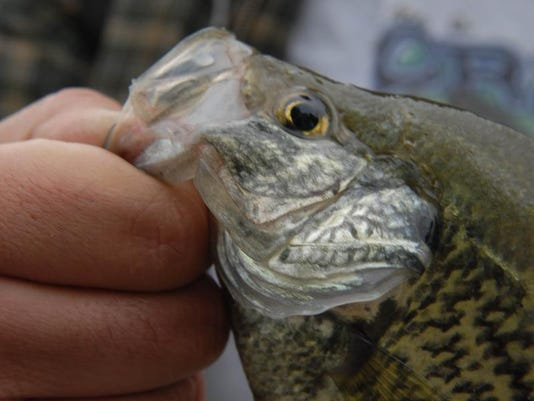 MNCO 0511 Dick Martin on crappie fishing's popularity in Ohio.jpg