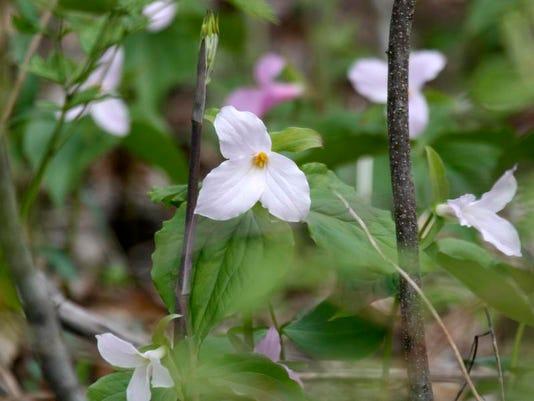 Spring Shenandoah.jpg