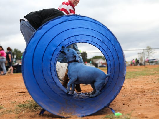 Dogs play in obstacles during the grand opening of the dog park Saturday, Oct. 21, 2017, along the Red Arroyo Trail.