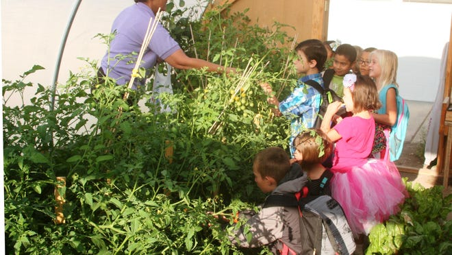 Judy Halterman (left), hands some freshly-picked vegetables Monday morning to students in the Yerington Elementary School hoop house, which has proven popular with students since school started again last week. The hoop house is part of an anti-obesity program funded by a University of Nevada Cooperative Extension grant. Smith Valley School also has a hoop house as part of the same grant-funded program.