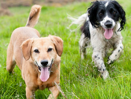 635949303111683861-monroe-vets-Dogs-in-Field.jpg