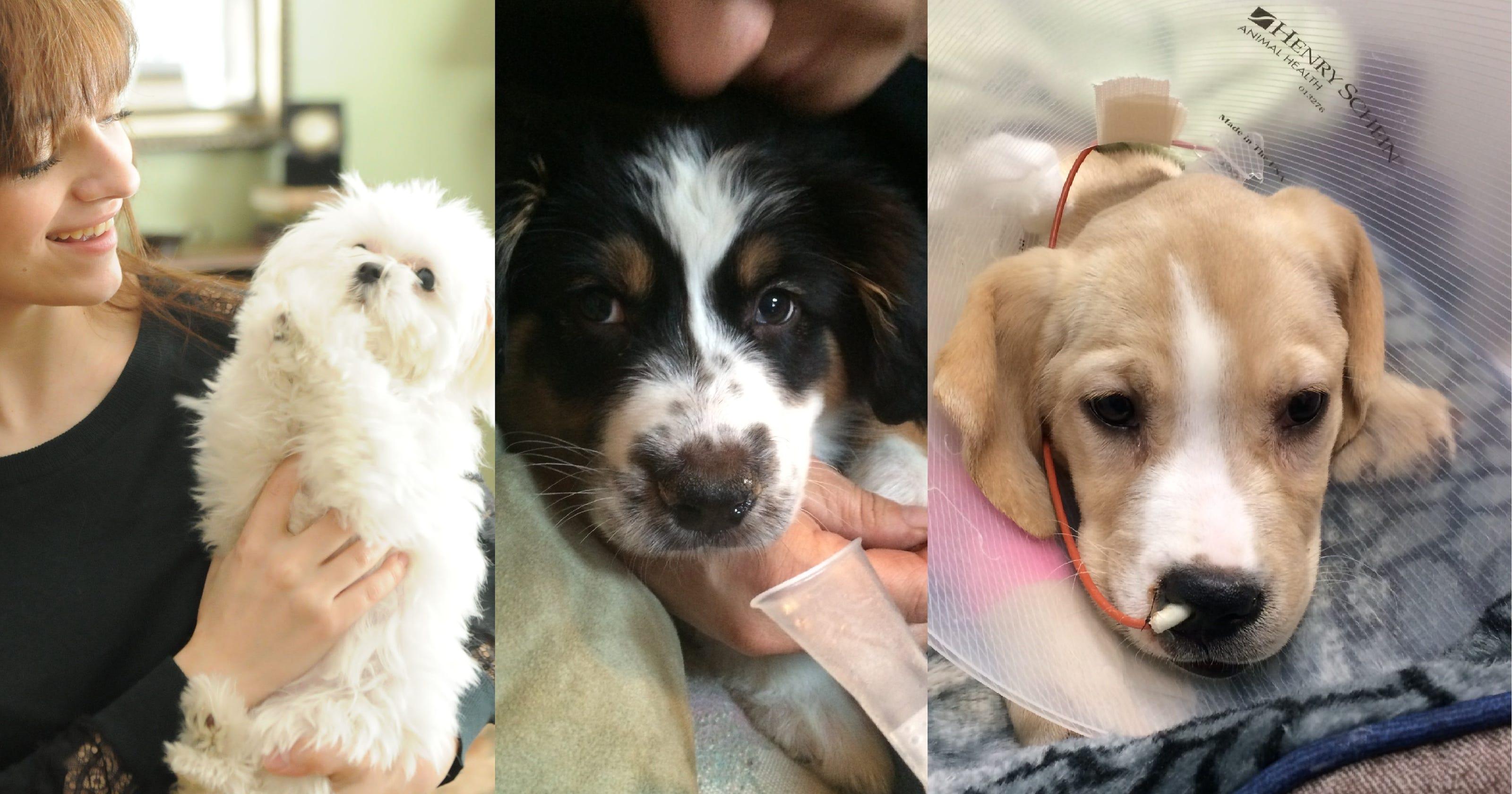 Vet bills soar when pet-store pups get sick