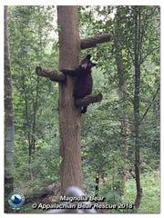 Magnolia was rescued from Concordia Parish in Louisiana,