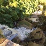 The weir/low dam at Lake Spencer.