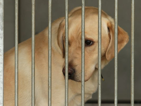 Higher Cost Of Living Drives People To Abandon Pets