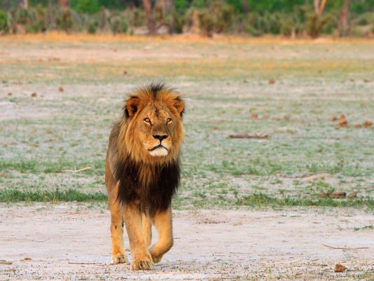 Zimbabwe wants extradition of US dentist who killed Cecil the lion