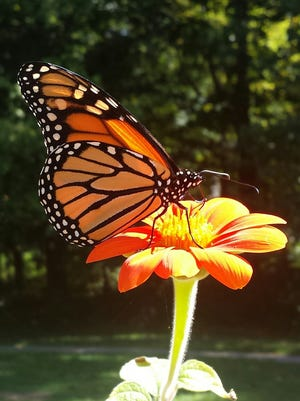 Explore nature with the Somerset County Library System of New Jersey (SCLSNJ) through a series of nature-inspired programs.