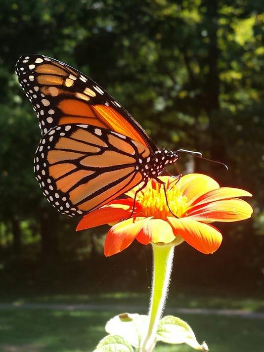 "Trailside Talks ""Pollinators"" June 3"