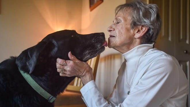 Onyx, a pure Black Lab, licks his owner, Nancy Sheaffer inside their home on Friday in Chambersburg. Onyx had been stolen at Sheetz gas station off of Norland on Wednesday and was reunited with Sheaffer Friday.